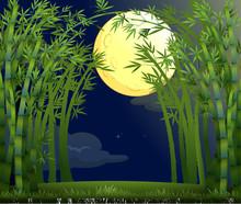 Une forêt tropicale sous le clair de lune