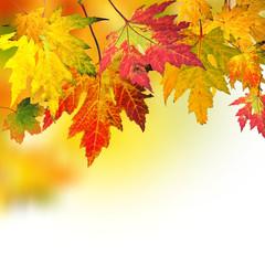 Fallende Blätter im Herbst