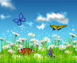 butterflies flying in the field of daisies