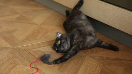 Young cat lying tired with his toy-mouse.