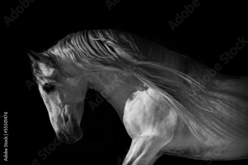 horse portrait on a dark background