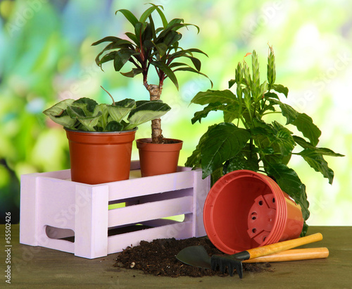 Beautiful flowers in pots on table on bright background
