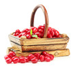 Fresh cornel berries in wooden basket, isolated on white