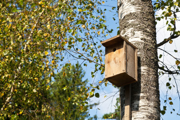 wooden birdhouse on birch