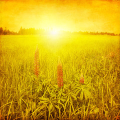 Grunge image of field with wildflowers at sunset.