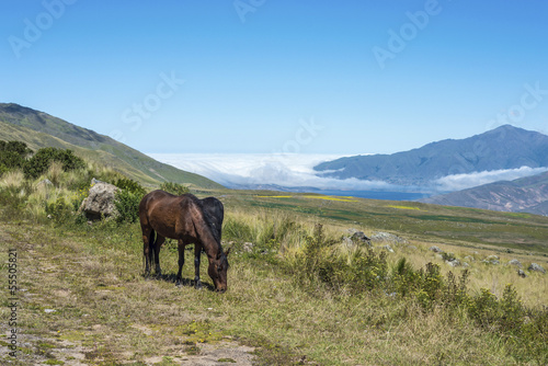 Horse near Tafi del Valle lake in Tucuman, Argentina.