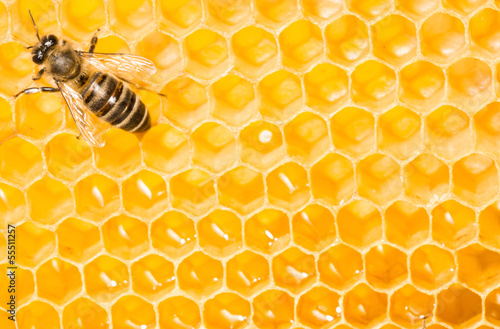 Macro of working bee on honeycells.