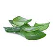 aloe plant body care concept