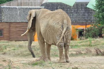 elephant de planete sauvage