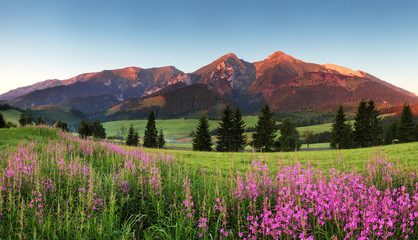 Beauty mountain panorama with flowers - Slovakia