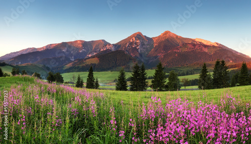 Beauty mountain panorama with flowers - Slovakia © TTstudio