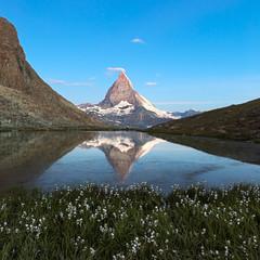 Matterhorn reflecton in Riffelsee with flowers, Zermatt, Alps, S