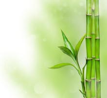 Fond vert avec bambou