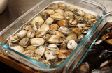 Live clams in water, close-up