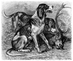 Hunting Dogs - Chiens de Chasse - Hirschhund