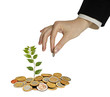 Investing to green business