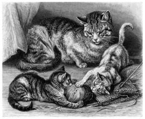 Cats Family - Chats - Katzen