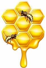 Медовые соты с пчелами