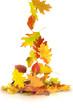 Herbst 67