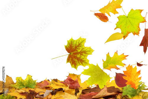 canvas print picture Herbst 69