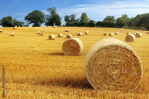 Leinwanddruck Bild Hay bales in golden field