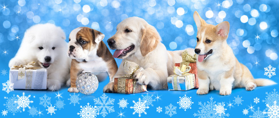 Puppies with Christmas gifts