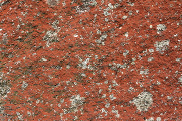 Rocks covered with various lichens