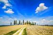 Tuscany farmland, trees and road. Siena, Val d Orcia, Italy.