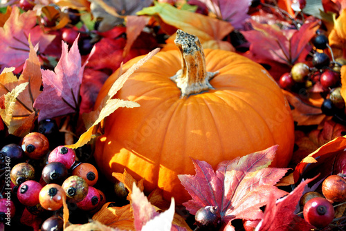 Pumpkin in Fall Leaves and Berries