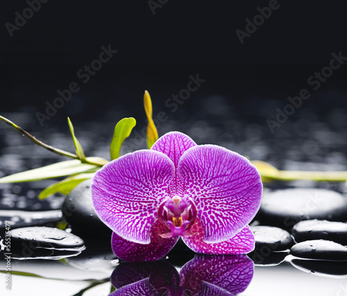 Macro of orchid and bamboo leaf with therapy stones