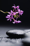 therapy stones with branch orchid