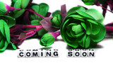 Coming soon with dark green flowers