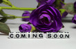 Magenta flower and coming soon message