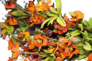 Colorful exotic flowers for gifting