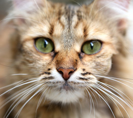 Close-up portrait of green-eyed cat.