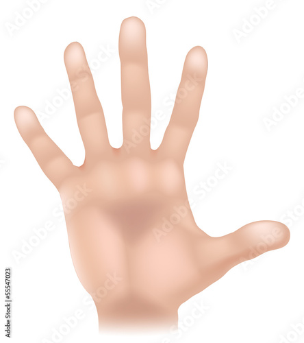 Hand body part illustration
