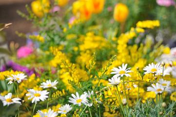 マーガレットと花畑