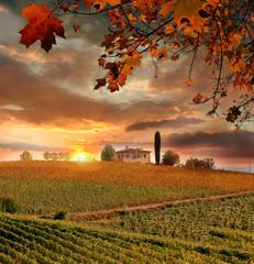 Vine landscape in Chianti, Italy