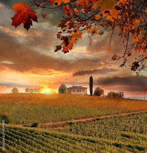 winogradu-krajobraz-w-chianti-wlochy