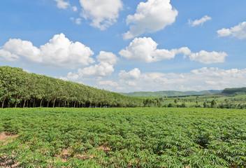 Landscape of farmland in Thailand