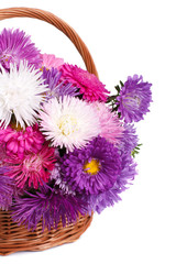 wicker basket with colorful flowers asters isolated