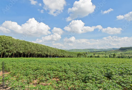 Landscape of farmland in Thailand