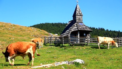 Cattle on high mountain pasture with chapel.