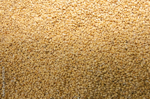 Wheat grain macro