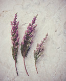 Dried heather on marble background