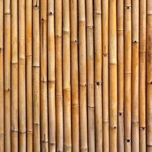Clôture de bambou