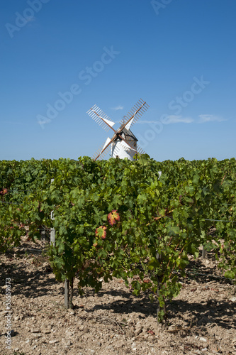 Windmill standing in a vineyard at Rosnay France