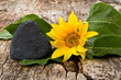 Sonnenblume mit Schieferherz auf Holz, Textfreiraum