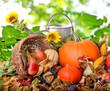 Herbst: Stillleben mit Gießkanne und Früchten