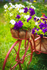 Decorative Bicycle In Garden